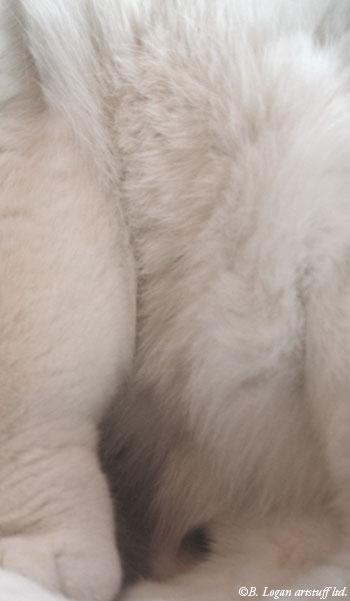 Warmest-softest-belly
