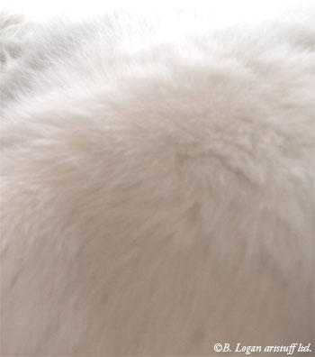 Softest-fur-ever