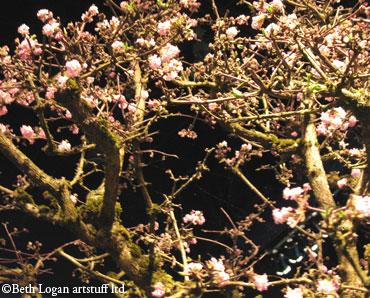 Garden-show_cherry