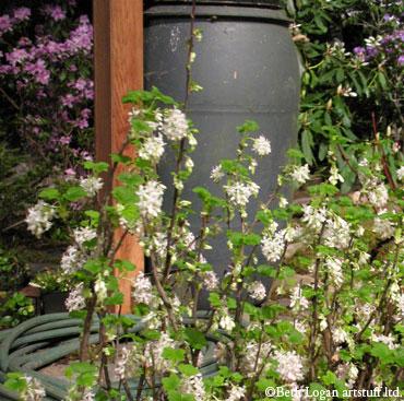 Garden-show-rainbarrel1