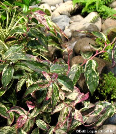 Garden-show-foliage-rocks