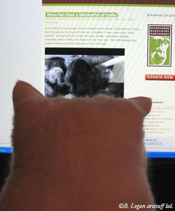 Watching-chimps