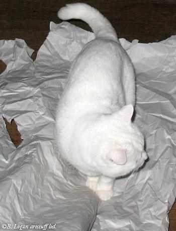 Flossie-paper-07