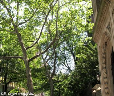 Ny-tree-lined-st-1