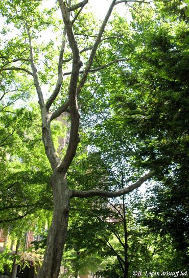 Ny-tree-lined-st-2