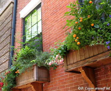 Ny-windowboxes-2