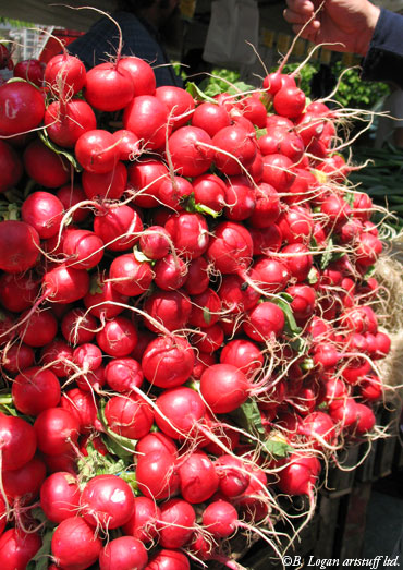 Union-sqr-radishes2