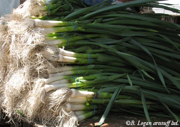 Union-sqr-scallions