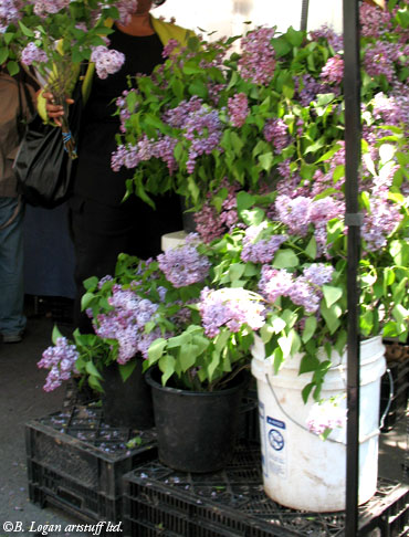 Union-sqr-lilacs
