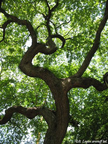 Best-tree-in-ny