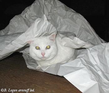 Flossie-paper-14