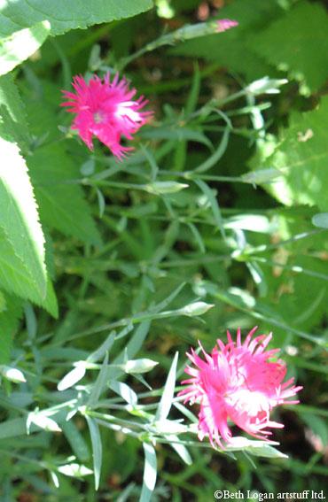 Pretty-pinks
