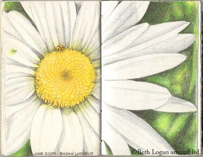 Daisy-sketch-garden-journal