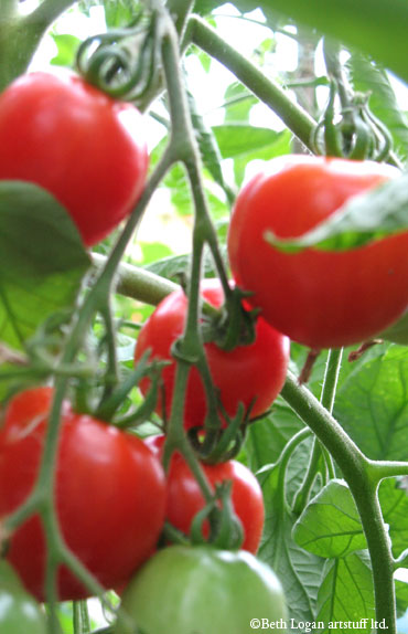 Delicious-tomatoes
