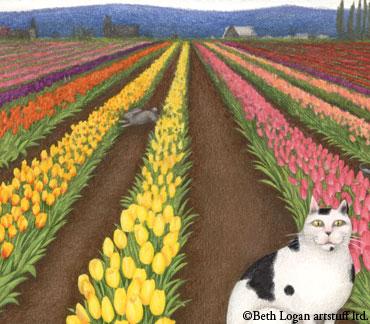 La-conner-tulips