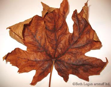 Just-a-brown-leaf-1