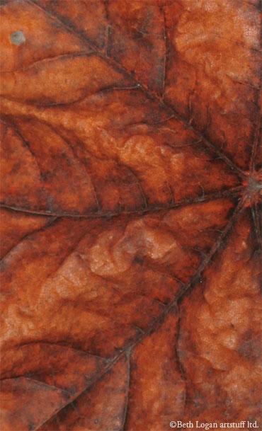Just-a-brown-leaf-2
