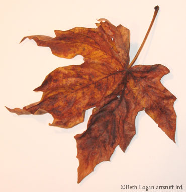 Just-a-brown-leaf-3