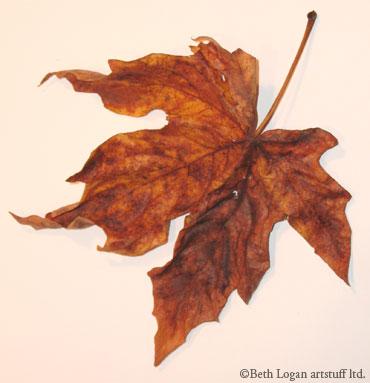 Just-a-brown-leaf-3