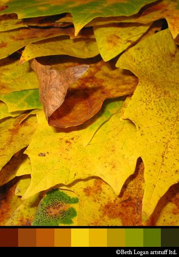 Fall-color-study-1
