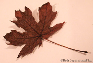 Just-a-brown-leaf-4