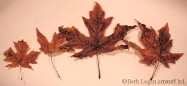 Brown-leaves-2