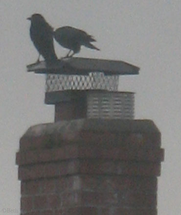 Crows-chimney-1