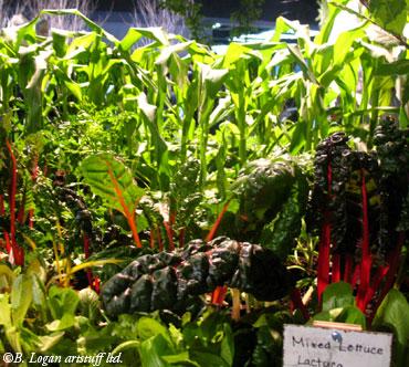 Nwf&gs-cropsforclunkers2
