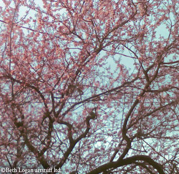 February-pink
