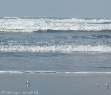 Shorebirds-n-surf