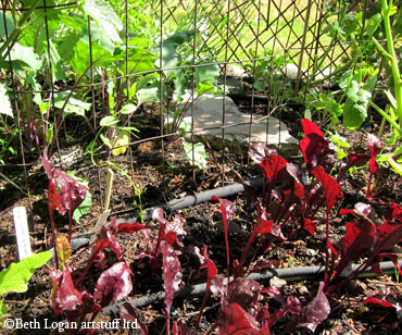 Little-beets