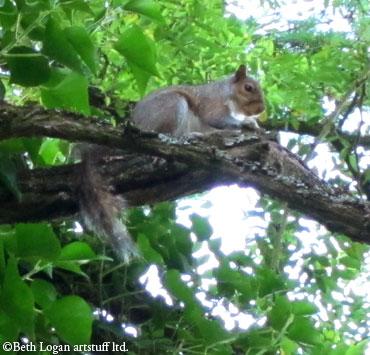 July10-squirrel