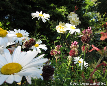 July-daisies3