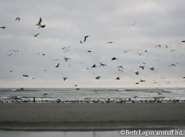 Lots-of-birds-flying