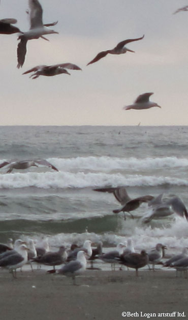 Gulls-flying
