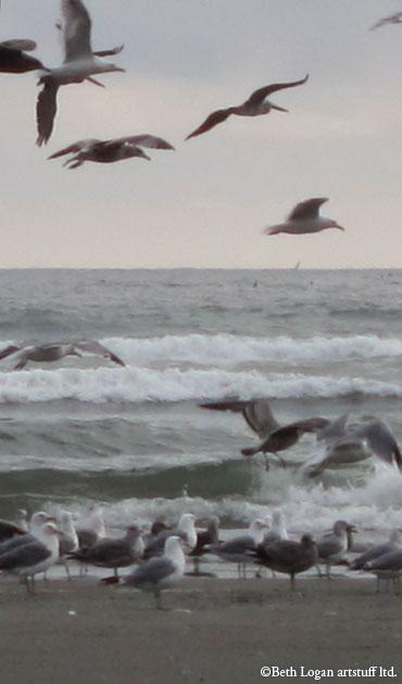 Gulls-flying