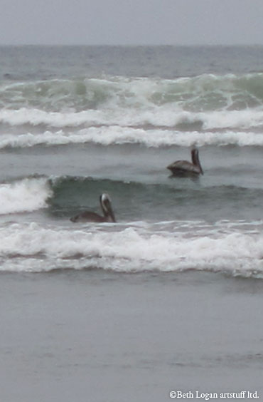 Pelicans-surfing