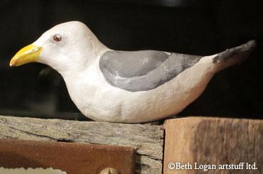 Little-western-gull