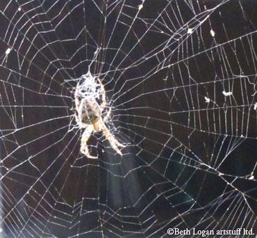 Spiderweb-front