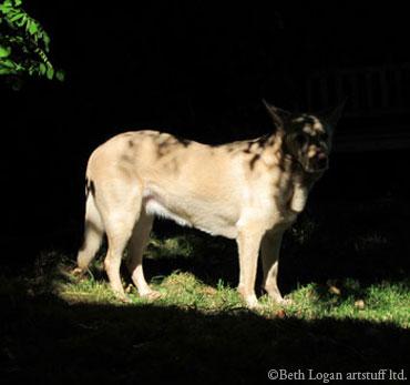 Camo-dog