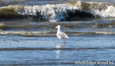 OS-gull-surf-2
