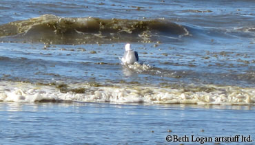 OS-gull-surf-3
