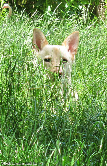 Molly-tall-grass