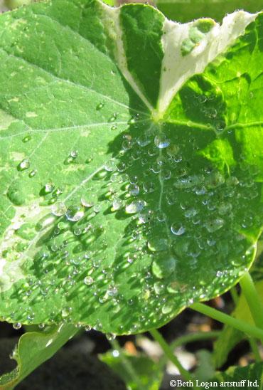 Nasturtium-leaf-jewels-4