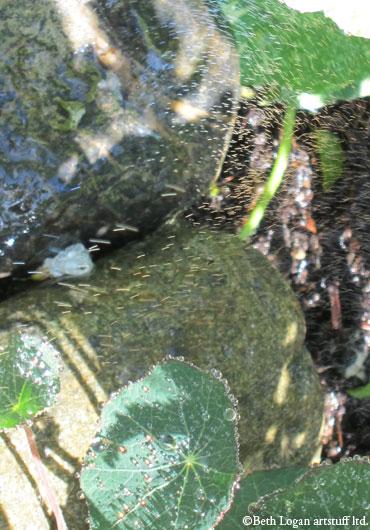 Nasturtium-leaf-sprinkle