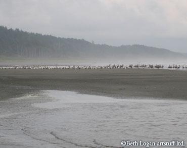 Lots-of-birds