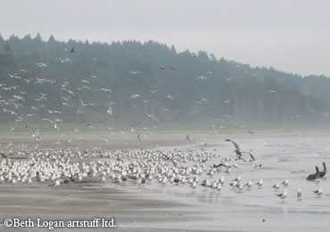 Lots-and-lots-of-birds