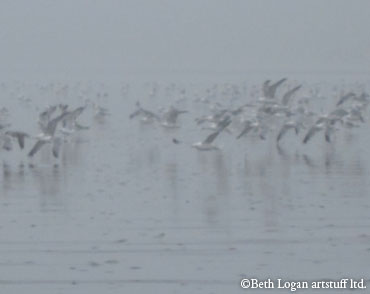 Birds-in-the-fog