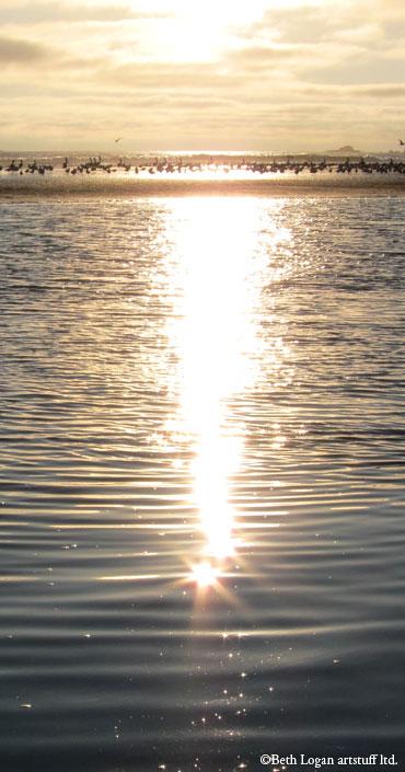 Pelicans-gulls-sunset-2