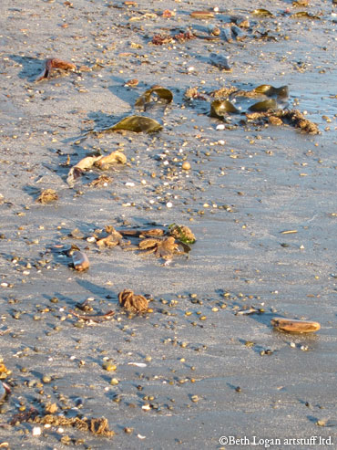 Sugar-frosted-low-tide-2